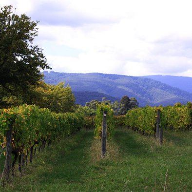 Killara winery