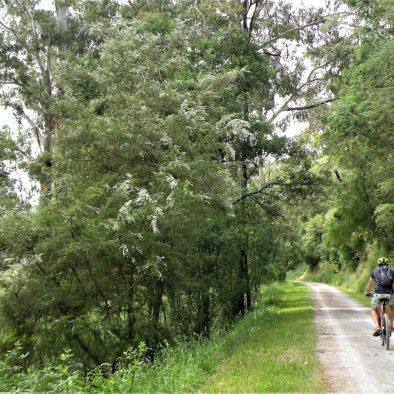 Warby trail